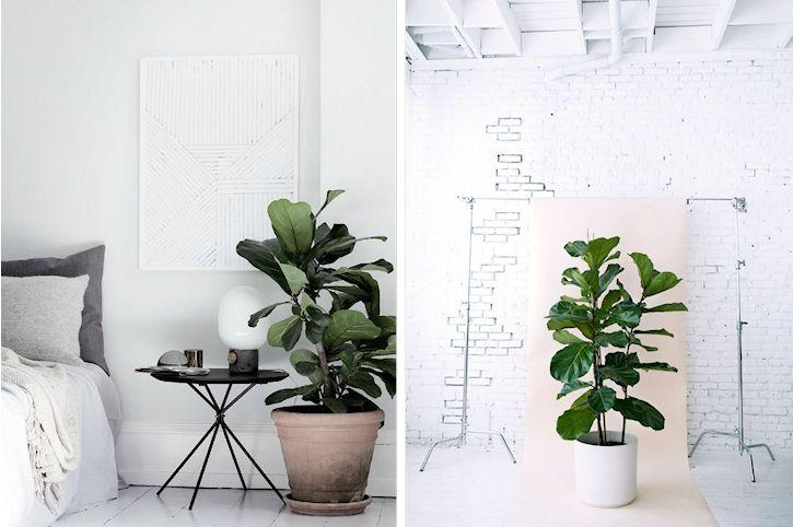Plantas de interior de hojas atractivas para decorar for Plantas de interior duraderas